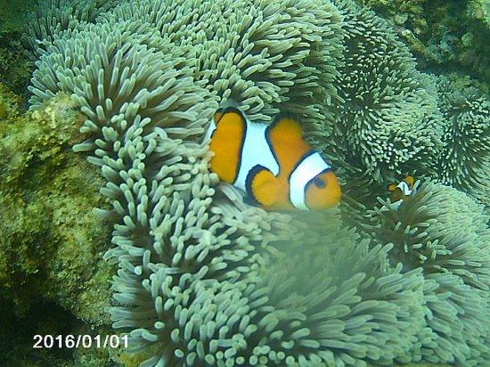 Halal Lombok Holidays: gili nanggu snorkeling