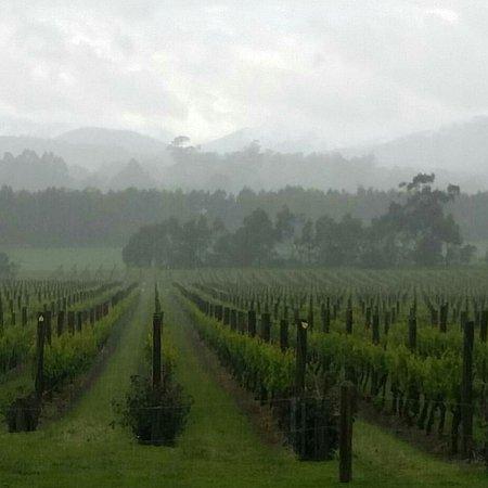 Epicurean Fine Food and Wine Tours: Yarra Valley wine tour www.epicureantours.com.au