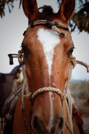 Μπάχα Καλιφόρνια, Μεξικό: Hola, yo soy martillo, wanna a ride,  y te llevare a la orilla  de la playa donde podras relajar