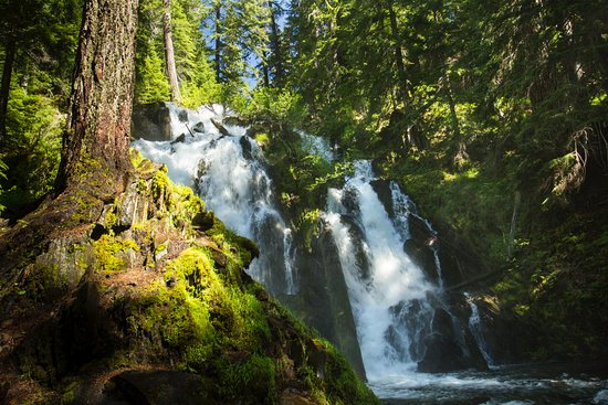 Prospect, OR: National Creek Falls in June.