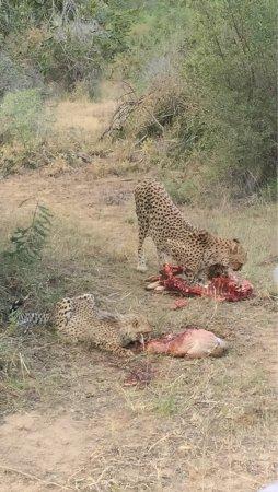พอร์ตเอลิซาเบท, แอฟริกาใต้: photo5.jpg