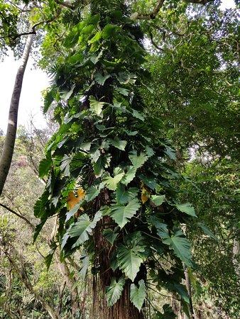 Waimea Valley: Lush vegetation