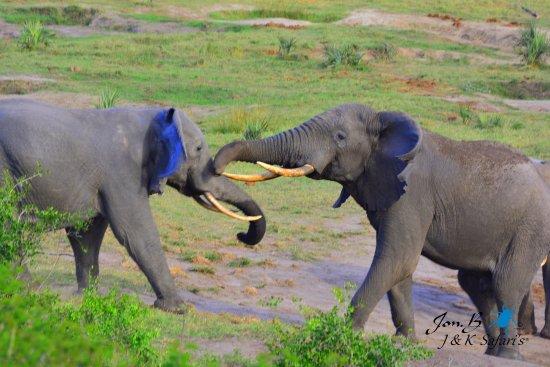 St Lucia, Sudáfrica: Tembe Elephant Park, KZN