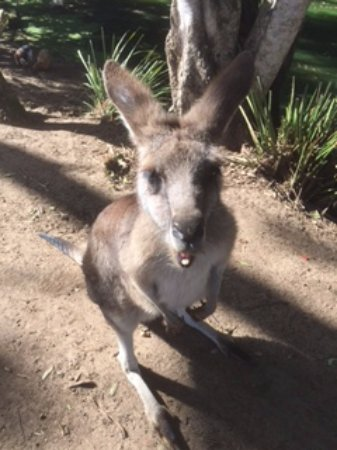 Woombye, Austrália: Inquisitive
