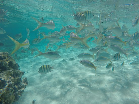 Paradise Island & The Mangroves (Cayo Arena): Cayo Paraiso