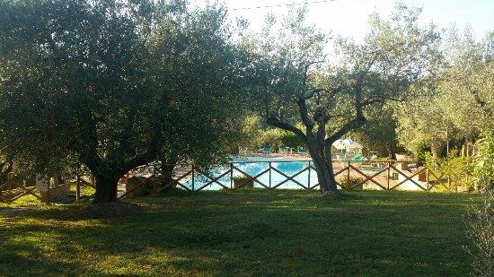 Montespertoli, Italia: The wonderful pool located between olive trees - just beautiful!