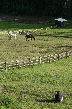 Mount 7 Lodges: Blick auf die Pferde