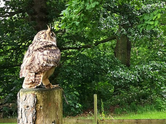 Helmsley, UK: National Centre for Birds of Prey