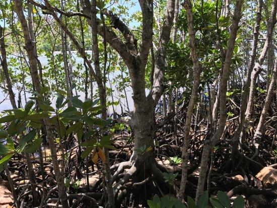Остров Праслен, Сейшельские острова: Curieuse Island