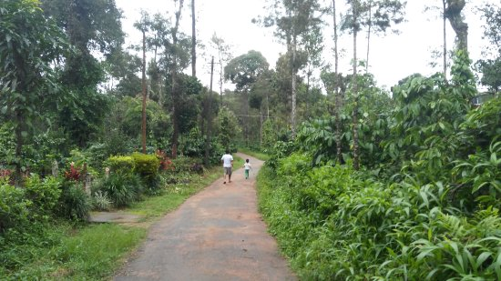 """""""Awesome Stay in Coorg with Family"""""""