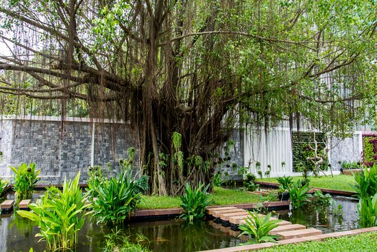 Topaz peaceful garden and Banyan tree  in the heart of the city