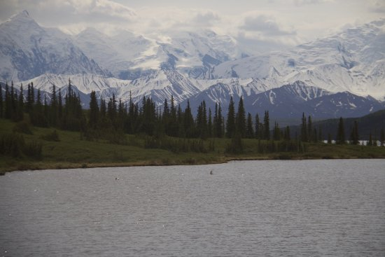 The mountains with ducks on Wonder Lake