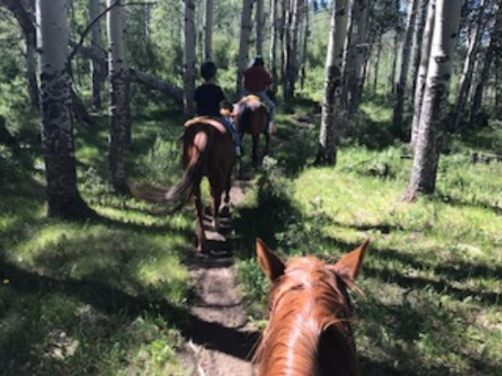 Kremmling, CO: Riding through the trees.
