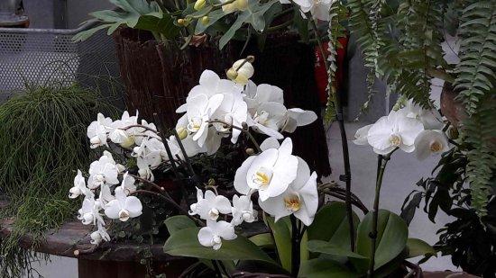 Orchidée - Photo de Jardin des Plantes, Amiens - TripAdvisor