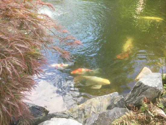 Saint Charles, IL: The Koi Whisperer Sanctuary & Japanese Gardens