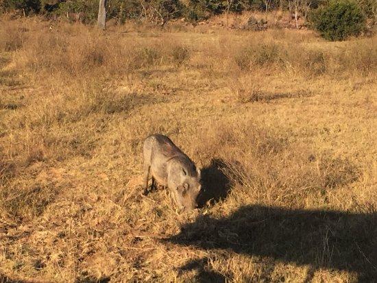 Welgevonden Game Reserve, África do Sul: photo6.jpg