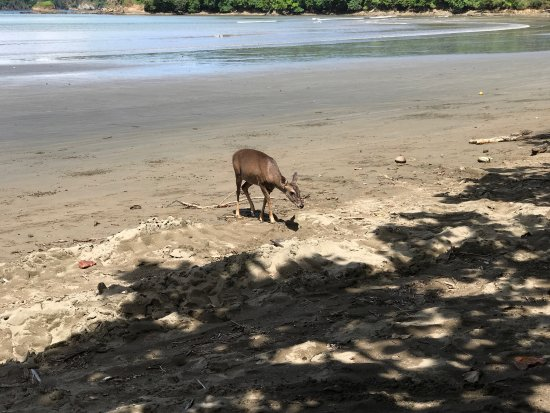 Curu National Wildlife Refuge: Lots animals like deer, iguana, white faced monkeys