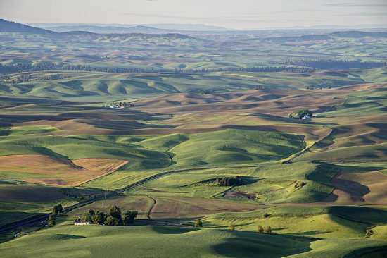 Colfax, WA: The Palouse in early morning light.