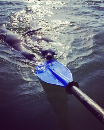 Walvis Bay, ناميبيا: Seals will play with your paddle~