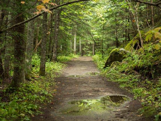 Parc de la Rivière Mitis