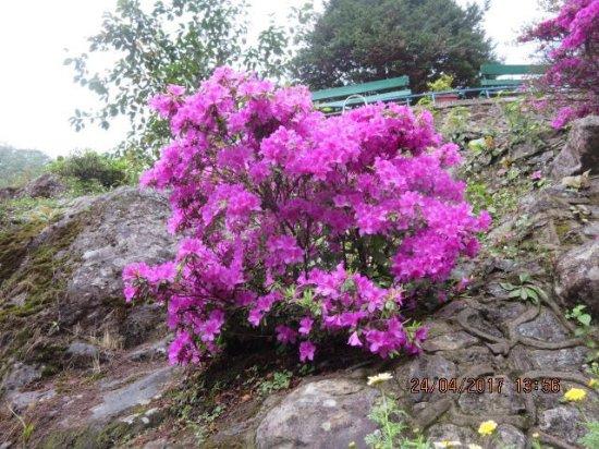 Beautiful pink flowering bush inside brg picture of barbotey rock barbotey rock garden beautiful pink flowering bush inside brg mightylinksfo