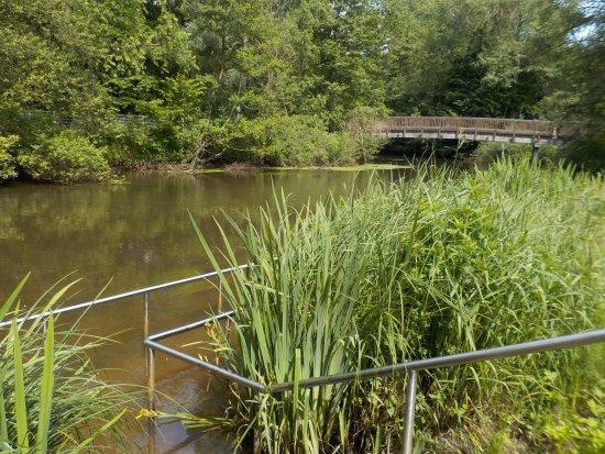 Bad Bevensen, Germany: Kneippkur im Park