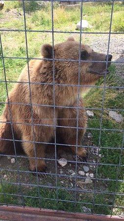 Kamloops Wildlife Park: photo1.jpg
