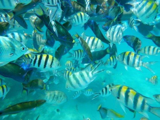 Coral View Island Resort: Vero acquario a cielo aperto