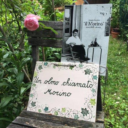 Sant'Agata Feltria, İtalya: Un olmo chiamato Morino