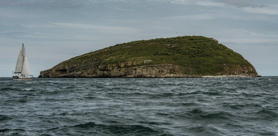 Beaumaris, UK: Puffin Island