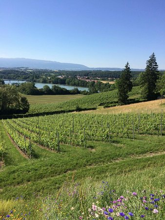 Domaine De Chateauvieux: View from the hotel balcony