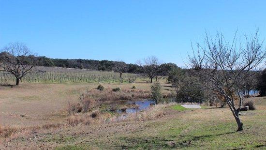 Flat Creek Disc Golf Destination: Disc Golf & Vineyard Views