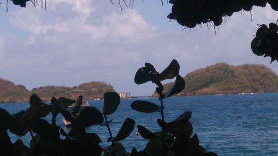Speyside, Tobago: DSC_0144_large.jpg