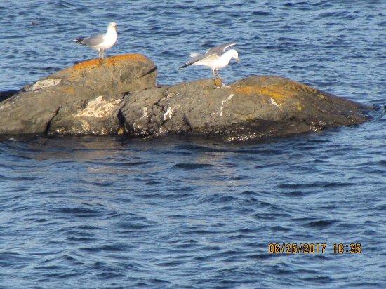 Quirpon Island, Καναδάς: photo3.jpg