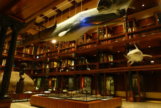 Bishop Museum : Main room