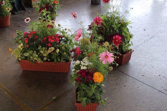 Central New York Regional Market: Beautiful flower pots!