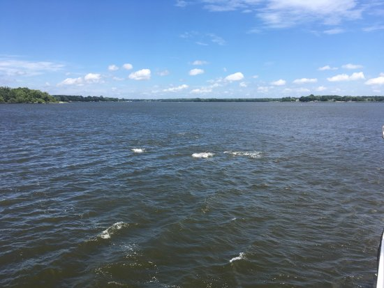 St. Michaels, MD: View Down River & Dolphins