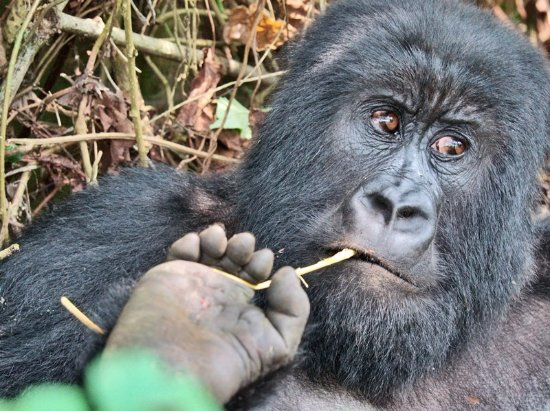 Virunga Amani Tours and Travel