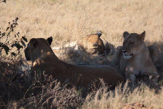 Savute Safari Lodge Photo