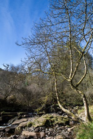 Whiting Bay, UK: walk to Glenashdale falls