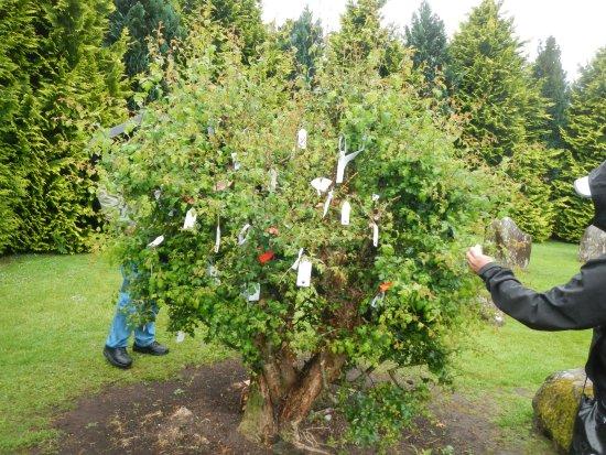 Kenmare, Irland: Fairy tree/bush