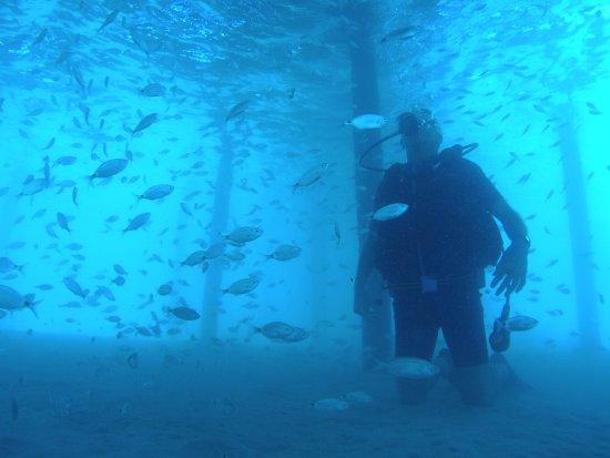 Didim Diving