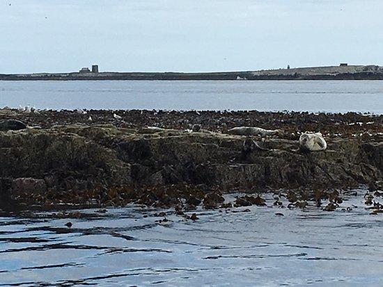 Seahouses, UK: photo4.jpg