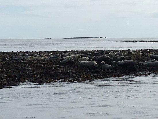 Seahouses, UK: photo5.jpg