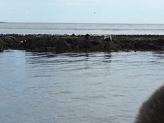 Seahouses, UK: photo6.jpg