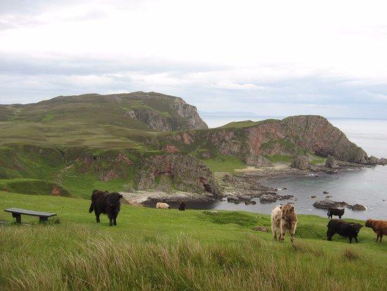 Islay, UK: Wild Goats