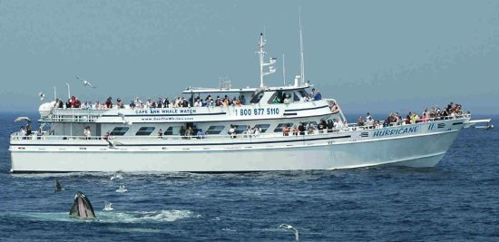 Cape Ann Whale Watch: The Hurricane ll is the areas largest and fastest whale watching boat.