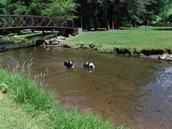 Sigel, Pensilvania: Our dogs in Clear Creek