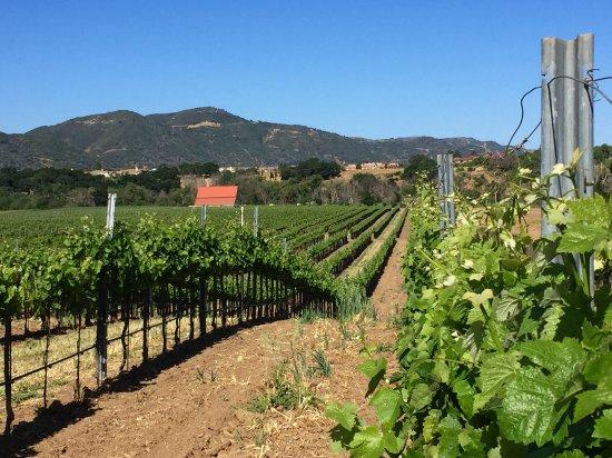 Coquelicot Estate Vineyards