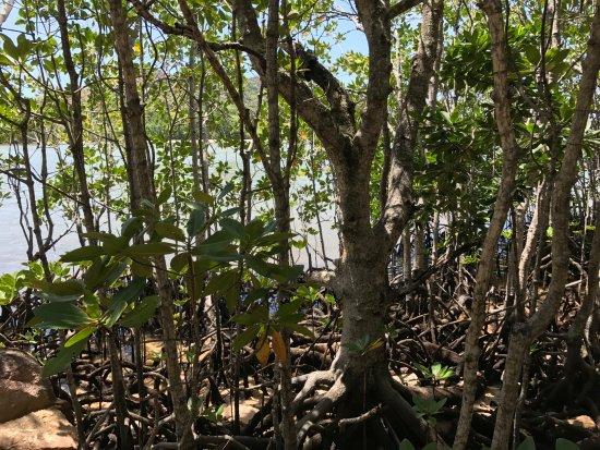 Praslin Adası, Seyşeller: Curieuse Island